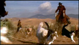 herdingcats